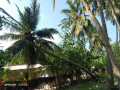 coconut-land-for-sale-in-kodikamam-small-0