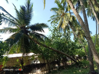 Coconut land for sale in Kodikamam
