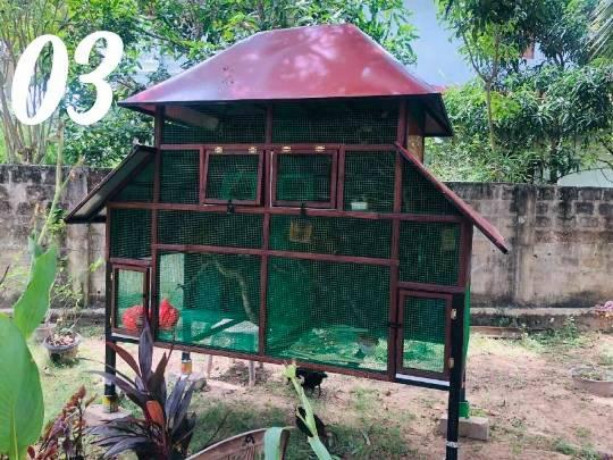 all-kind-of-pets-cages-making-in-jaffna-big-1