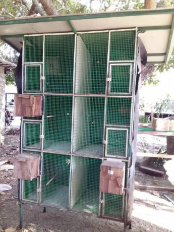 all-kind-of-pets-cages-making-in-jaffna-big-2