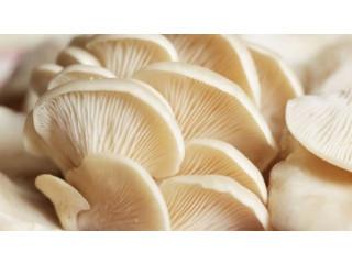 Mushroom for sale in jaffna