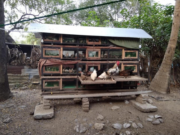 cage-for-sale-with-quails-big-0