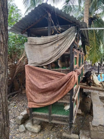 cage-for-sale-with-quails-big-2
