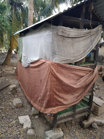 cage-for-sale-with-quails-big-1