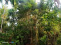 house-for-sale-in-jaffna-puttur-small-3
