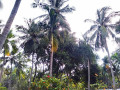 house-for-sale-in-jaffna-earlalai-small-2