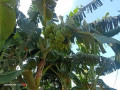 land-for-sale-in-jaffna-siruppiddy-small-3