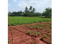 land-for-sale-in-jaffna-siruppiddy-small-1