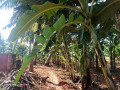 land-for-sale-in-jaffna-siruppiddy-small-2