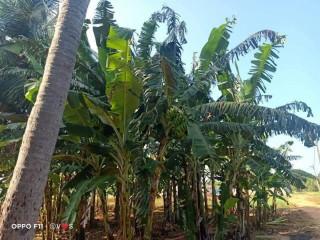 Land for sale in Jaffna siruppiddy