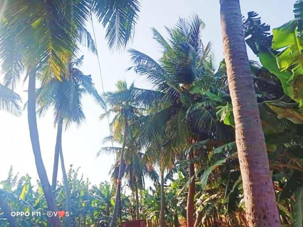land-for-sale-in-jaffna-siruppiddy-big-4