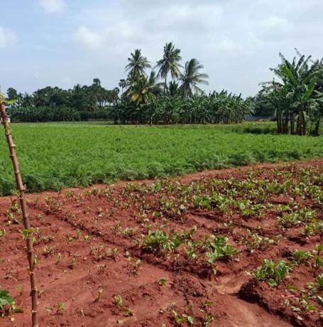 land-for-sale-in-jaffna-siruppiddy-big-1