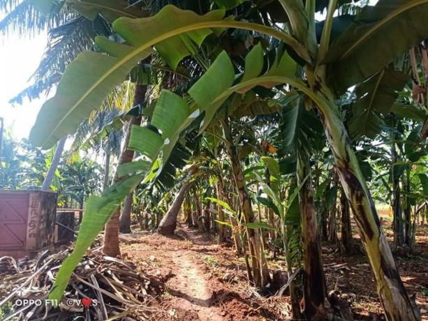 land-for-sale-in-jaffna-siruppiddy-big-2