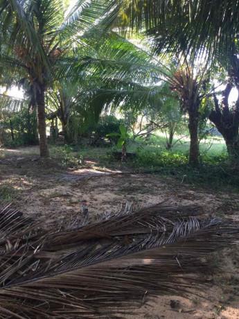 land-for-sale-in-jaffna-iyakachchi-big-1