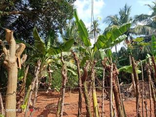 Land for sale in Jaffna