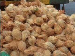 Coconut for sale in jaffna