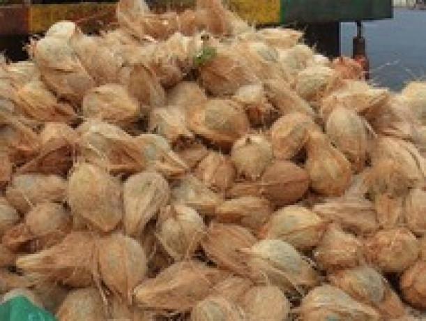 coconut-for-sale-in-jaffna-big-0
