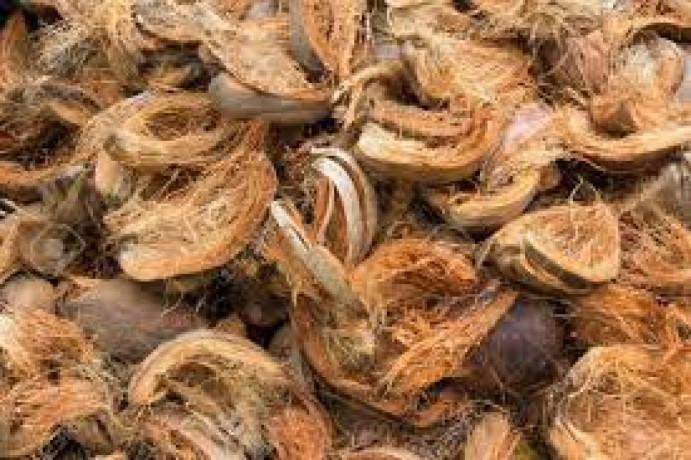 coconut-for-sale-in-jaffna-big-1