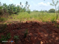 land-for-sale-in-jaffna-small-0