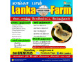 chickens-for-sale-in-nelliyady-small-0