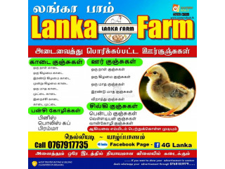 Chickens for sale in nelliyady