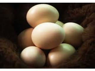 Country hen egg sale in jaffna