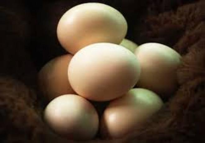 country-hen-egg-sale-in-jaffna-big-0