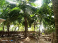 house-for-sale-in-jaffna-kodikamam-small-2