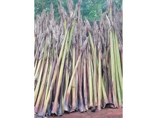 Palm bat for sale in jaffna
