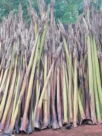 palm-bat-for-sale-in-jaffna-big-0