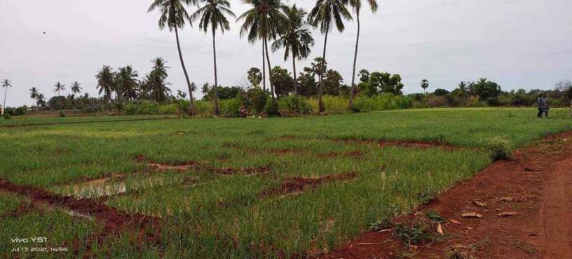 land-for-sale-in-jaffna-big-1