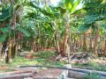 jaffna-evinai-farm-land-for-sale-small-3