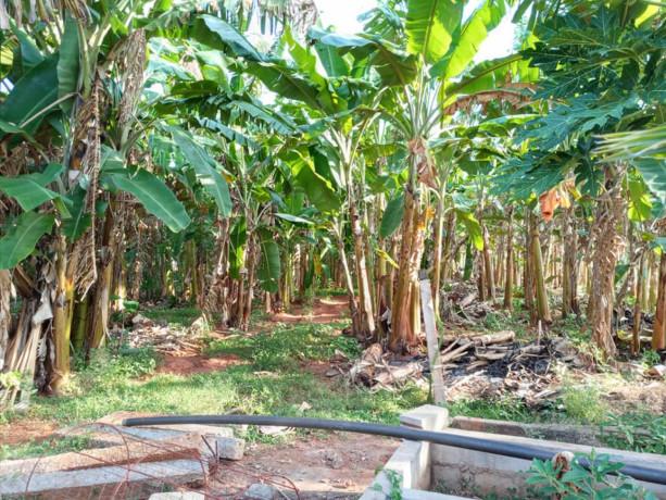 jaffna-evinai-farm-land-for-sale-big-3