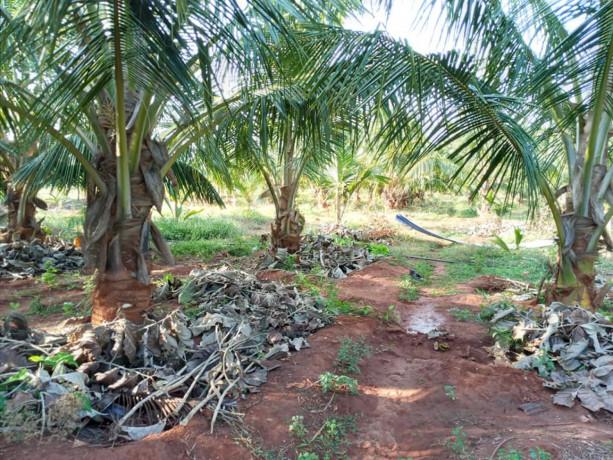 jaffna-evinai-farm-land-for-sale-big-4