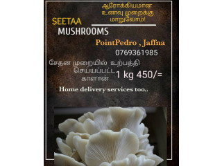 Oyster mushroom for sale in pointpedro