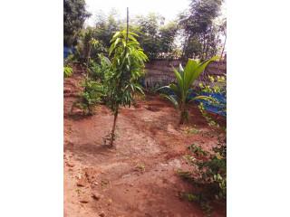 House, Land for sale in jaffna vasavilan