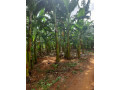 land-for-sale-in-jaffna-small-4