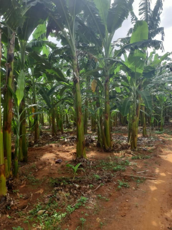 land-for-sale-in-jaffna-big-4